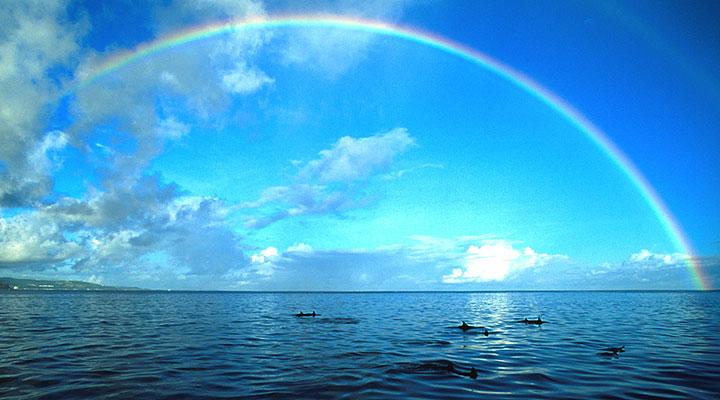 グアムでドルフィンウォッチング グアムでイルカに会いましょう : グアムのイルカウォッチングww
